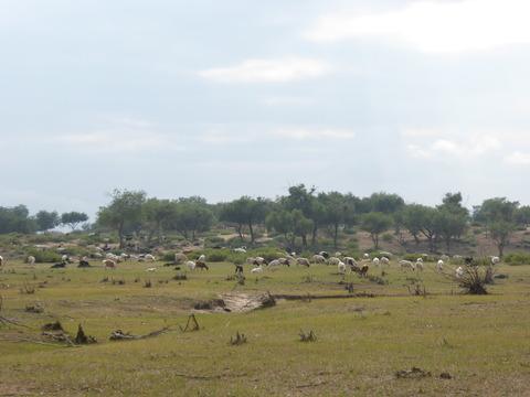 ツーリストキャンプ周辺 (8)