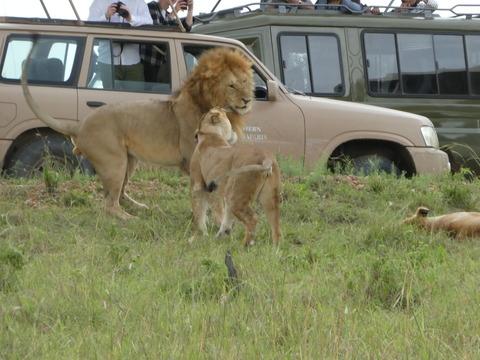 マサイマラ国立保護区 (62)