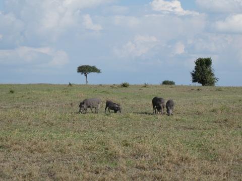 マサイマラ国立保護区 (32)