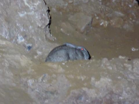 スタークフォンテン洞窟 7