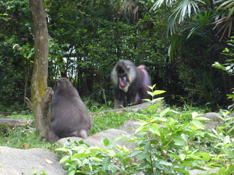 Singapore zoo18