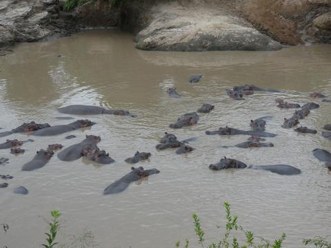 マサイマラ国立保護区 (90)