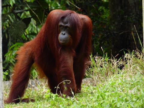 ②Lok Kawi Wild Life Park25