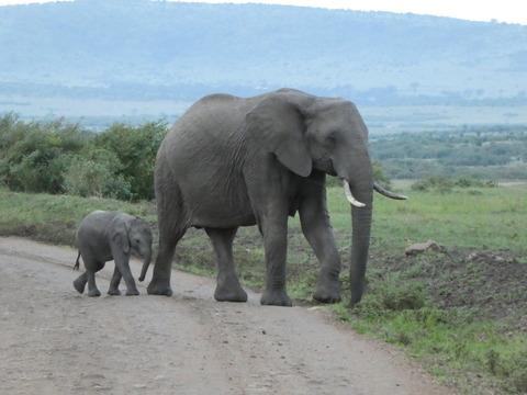 マサイマラ国立保護区 (17)