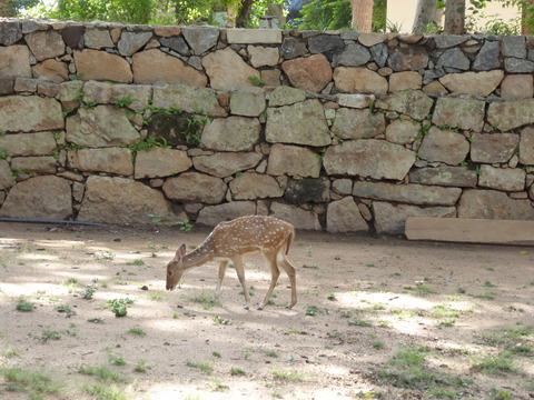 ①ミヒンタレ-17 まだら鹿
