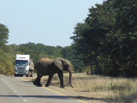 象さん 2