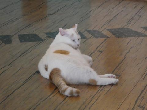 猫カフェ (14)