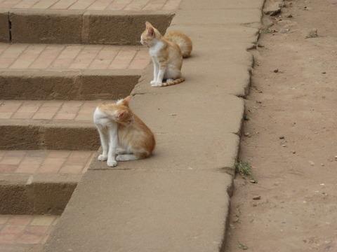 ④猫さん2