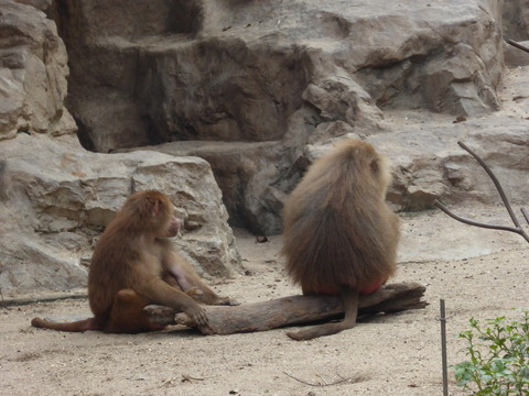 Singapore zoo5