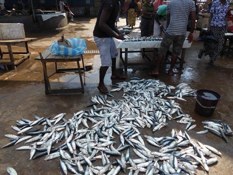①Fish market4