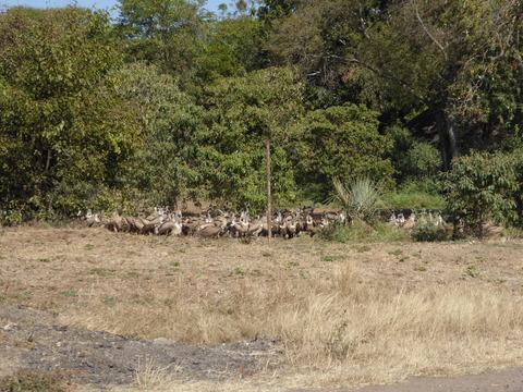 鳥の大群 1