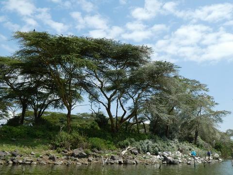 ナイバシャ湖 (91)