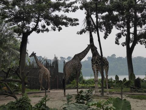 Singapore zoo14