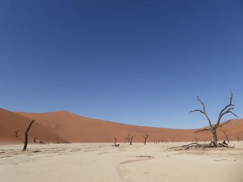 ナミブ砂漠 22