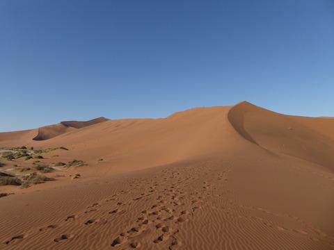 ナミブ砂漠 14