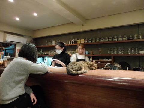 猫カフェ 極簡 (8)