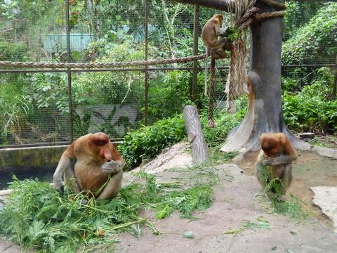 ②Lok Kawi Wild Life Park29