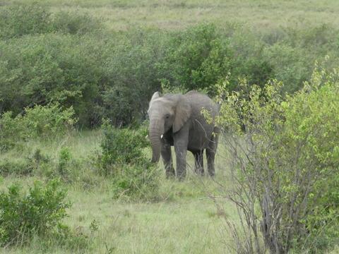 マサイマラ国立保護区 (72)