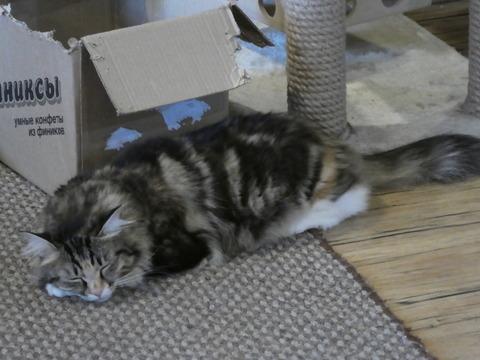 猫カフェ (16)