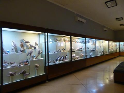 Natural museum of natural history (7)