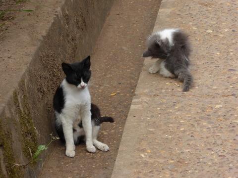 ④猫さん4