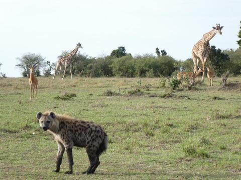 マサイマラ国立保護区 (128)