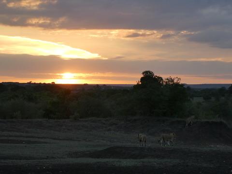 マサイマラ国立保護区 (49)