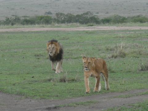 マサイマラ国立保護区 (65)