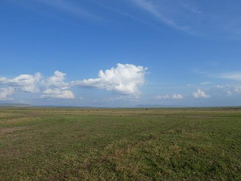 マサイマラ国立保護区 (85)