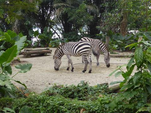 Singapore zoo10