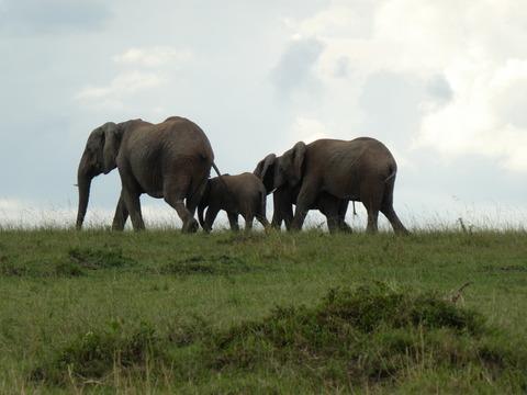 マサイマラ国立保護区 (29)