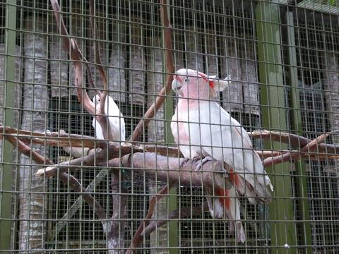 ②Lok Kawi Wild Life Park3