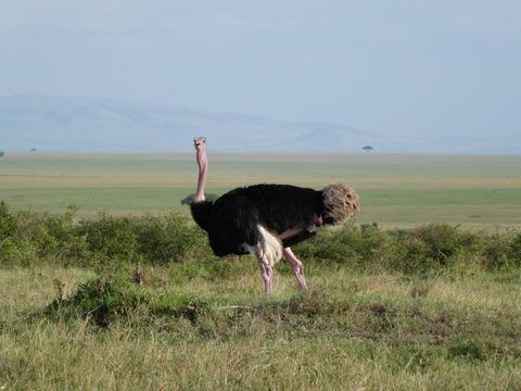 マサイマラ国立保護区 (92)