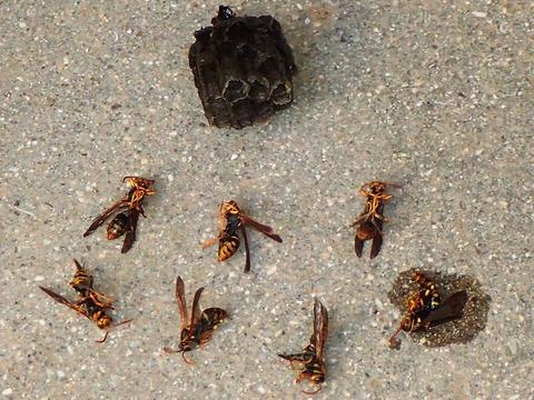 7匹だけどハチ