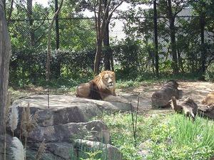 到津の森公園�
