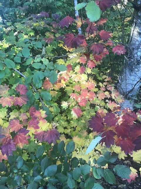 バンクーバー紅葉