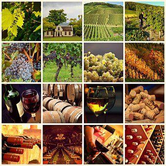 wine-1597376__340