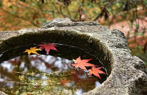 autumn-3838758__340
