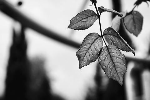 leaves-1209371__340
