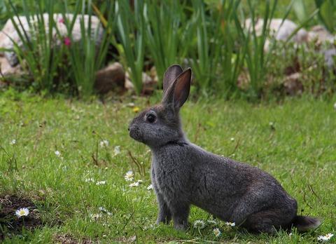 hare-1751616_960_720