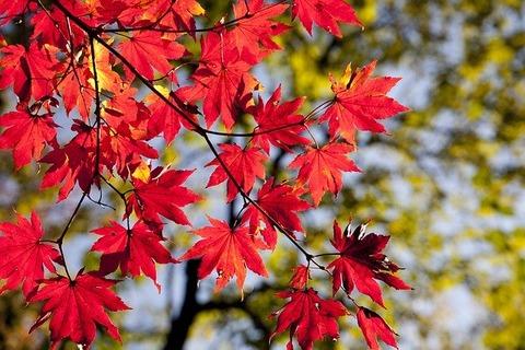 autumn-leaves-2789234_640