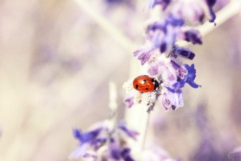 ladybug-676448__340