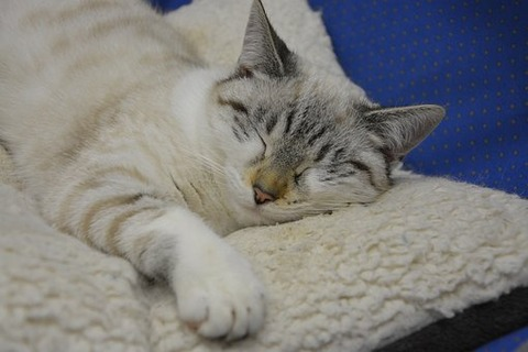 cat-sleeping-2983803__340