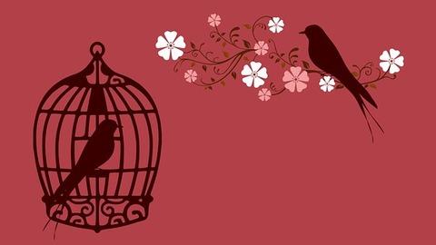bird-855222__340