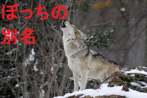 wolf-1992716__340