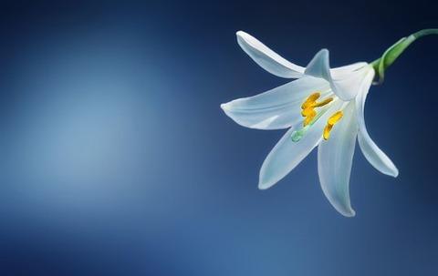 flower-729514__340