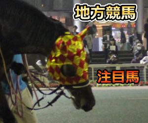 兵庫チャンピオンシップ