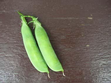 タイカレー、さやえんどう初収穫