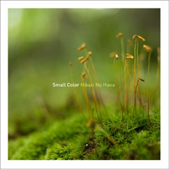 small color 「In Light」を偵察