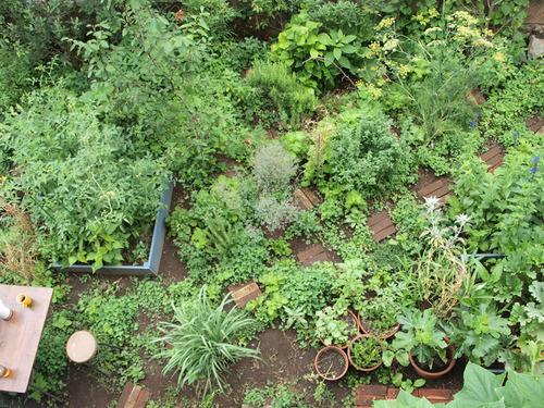連載「食べられる庭作り」スタートしました
